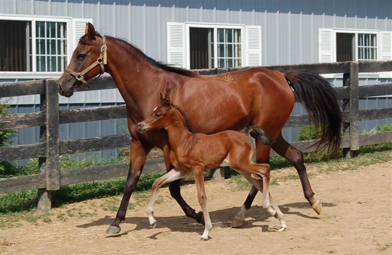 Atlantic Breeze 2010 filly