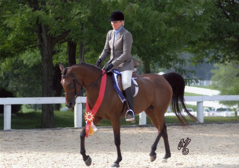 Just Breezin By Region 14 Sport Horse Reserve Champion