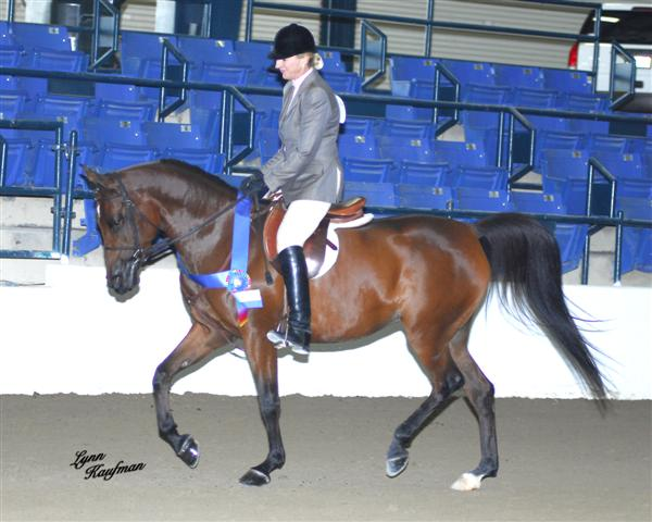Just Breezin By~ Champion Sport Horse Jr Horse