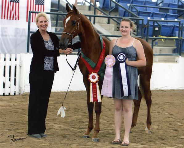 Monster Truck Reserve Champ Yearling Geldings